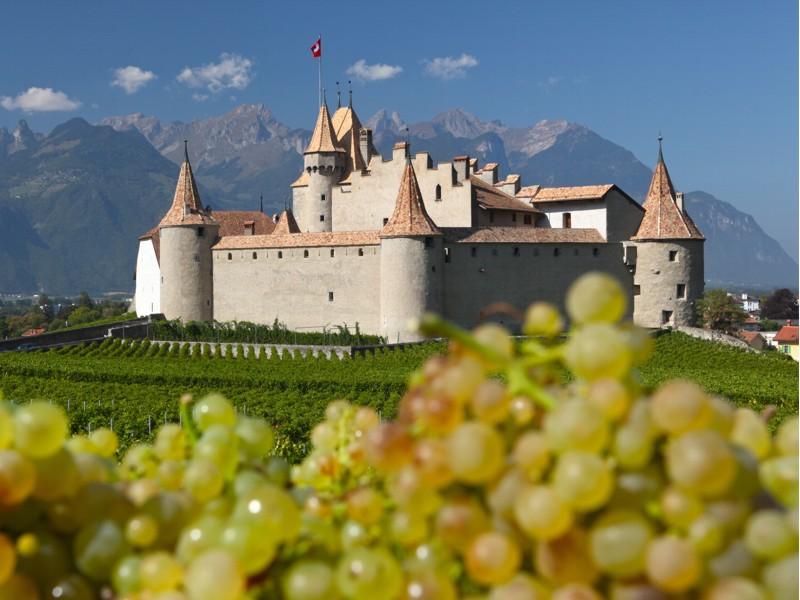Offre Musée de la vigne et du vin Aigle