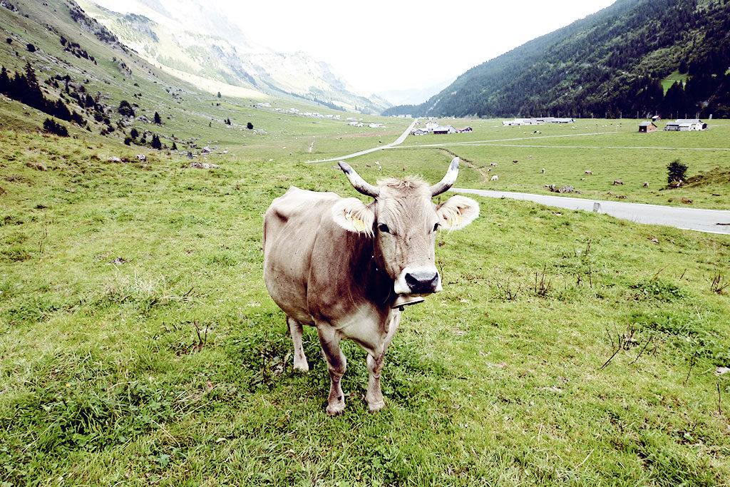 Alpkaeserei-Urnerboden-02-07-1024x683