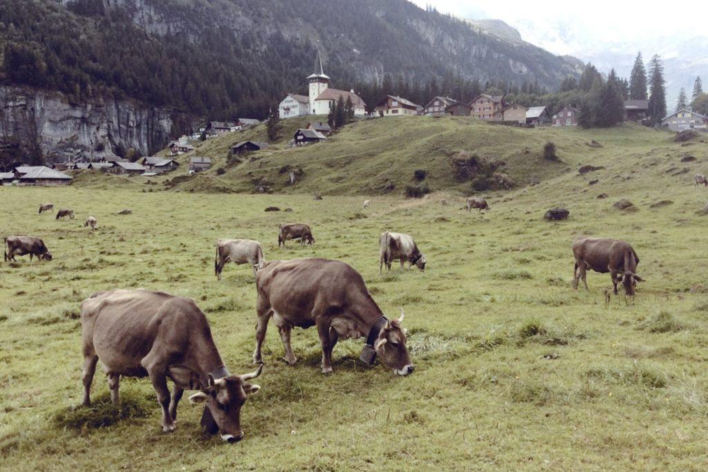 Alpkaeserei-Urnerboden-4-1024x683